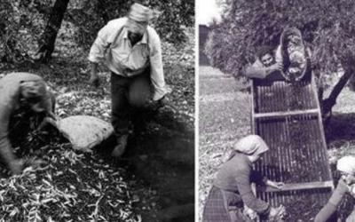 A lxs agricultorxs de la oliva