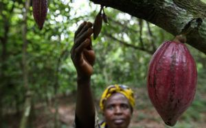 Chocolate orgánico elaborado por mujeres
