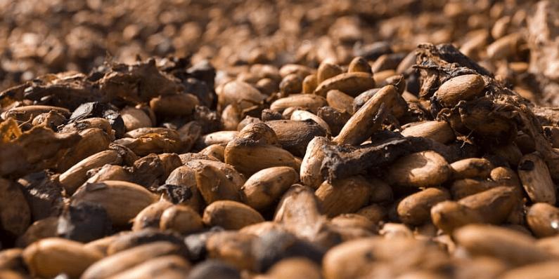cascarilla de cacao propiedades