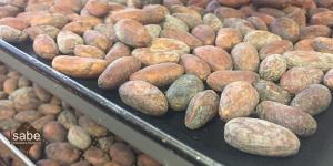 Proceso del tostado del cacao